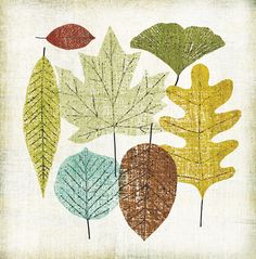 The Woodland Leaves Collection — Michael Mullan