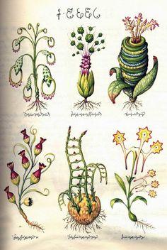 Luigi Serafini's masterpiece Codex Seraphinianus, or the Fantastical Encyclopedia. 1976-78