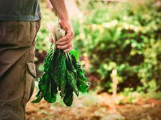 Mangiamo per soddisfare i nostri bisogni fisici o soddisfiamo i nostri bisogni (di ogni tipo), mangiando?