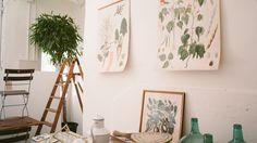 Ilustraciones de botánica, vegetación y decoración en The Nave. #vegetacion #damajuana #ilustracion #botanica #decoracion #vintage #thenave