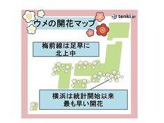 ウメ前線 足早に北上中 横浜は最早 - エキサイトニュース