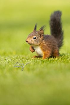 Baby Squirrel by Nadine Golomb on 500px