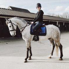 Aztec Diamond Equestrian (@aztecdiamondequestrian) • Instagram photos and videos