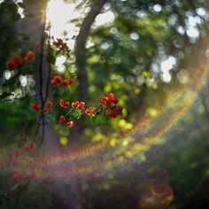 Testing the new member at @5uryagraphy ;) #5uryagraphy   #pune #puneinstagrammers #bokeh #bokehlicious #helios44  #lensflare #travel #traveltales #natgeo #natgeotravel #natgeocreative #lonelyplanet #lonelyplanetindia #betterphotography #India #Indian #winter #flower #flowers #red #green #naturelovers #naturelover #goldenhour #nikon #nikontop #nikonchallenge #maharashtra_ig #india_gram