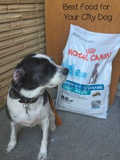Give your city dog the best nutrition and help him overcome stressors with Royal Canin URBAN LIFE dog food, the first food made for where your dog lives.  #WhatsYourPetsLifestyle