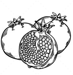 New Fruit Sketch Pomegranates Ideas Pomegranate Drawing, Pomegranate Tattoo, Pomegranate Art, Tattoo Sketches, Art Sketches, Fruit Sketch, Exotic Fruit, Fruit Art, Gravure