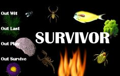 Survivor Philippines -- Getting Rid Of Abi-Normal Isn't Going To Be So Easy