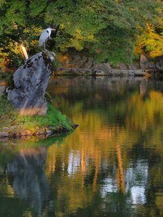 湖上青鷺図 霞ヶ池 兼六園