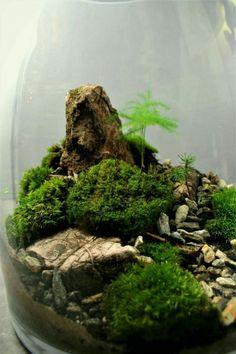 Bonsai Terrarium For Landscaping Miniature Inside The Jars 29