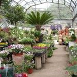 4 Useful Tips for Buying Plants from Nursery