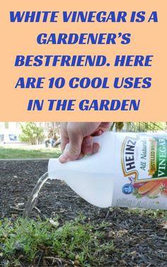 Garden Yard Ideas, Lawn And Garden, Garden Projects, Indoor Garden, Garden Landscaping, Gardening For Beginners, Gardening Tips, Garden Weeds, Garden Plants