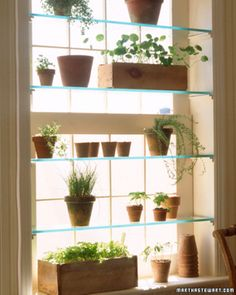 Glass shelves in the window would be nice. I used to have shelves like this in my TBay house...