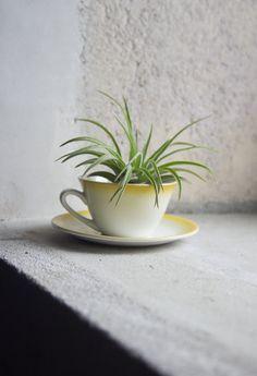 French Teacup Planter // Upcycled Vintage Ceramic Flower or Succulent Planter for Spring