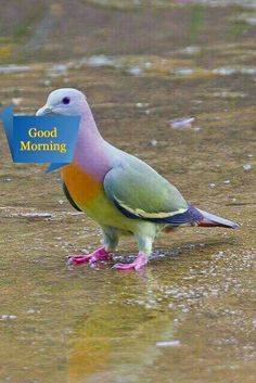 Look...God painted a bird!