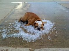 Dem Hund ist's heiß!