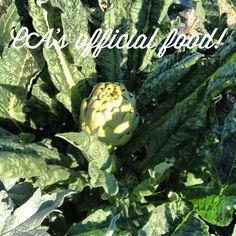 Chokes in the garden Carmel Valley Ranch, Organic Gardening, Acre, Mornings