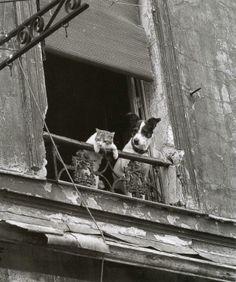 Dog and cat in Paris