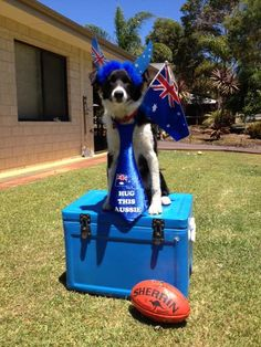 "Karri Pack - ""Elsa our beautiful Wish rescue dog is getting into the Aussie spirit #thedogline"""