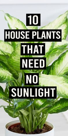 Not all plants need sunlight to grow well. There are many other greens which don. - Garden Care, Garden Design and Gardening Supplies Inside Plants, All Plants, Shade Plants, Live Plants, Best Indoor Plants, Outdoor Plants, Indoor House Plants, House Plants Decor, Plants In The House