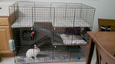 My PICK FOR OURS In this pic, could split mid level with grates so each in neutered bunny can have two floors sharing middle tip they're ready to take mid grates out and be together