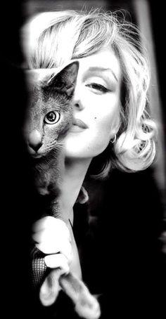 cat + marilyn