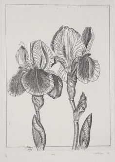 Jenny Phillips 'Iris' - Etching on paper