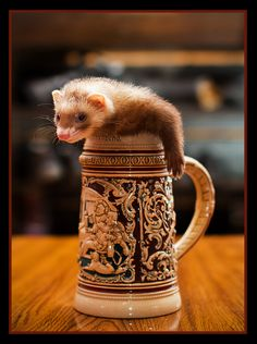 Ferret Lives In Mug, Does Not Grant Wishes