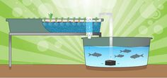 How Aquaponics Works    Gardening and Raising Fish For Survival Ideas and Tips by Survival Life http://survivallife.com/2015/06/23/intro-to-aquaponics/