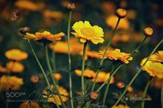 Yellow by santusaha #nature #mothernature #travel #traveling #vacation #visiting #trip #holiday #tourism #tourist #photooftheday #amazing #picoftheday