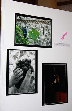 """Esposizione fotografica """"Dall'uva al calice"""""""