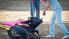 PETITION! · Stoppt die Tierquälerei während der Becerradas !!! · Change.org