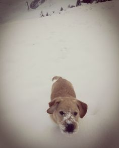 Snowdog Mans Best Friend, Dogs, Animals, Animales, Animaux, Pet Dogs, Doggies, Animal, Animais