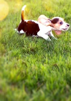 a cute puppy...trippin' over his ears...in my back yard!