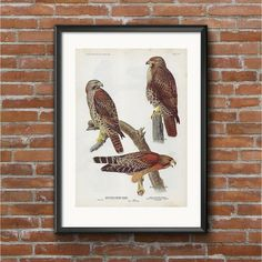 Vintage Birds, Vintage Prints, Original Copy, Vibrant Colors, Colours, Birds Of America, Old Paper, Bird Prints, Bird Art