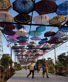 umbrella's in iraq