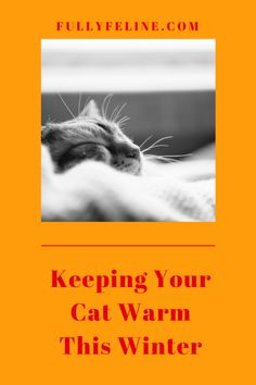 Tips for keeping your cat warm in winter #cathealth #catcare