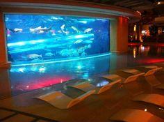 Golden Nugget Shark Tank
