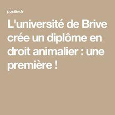 L'université de Brive crée un diplôme en droit animalier : une première !