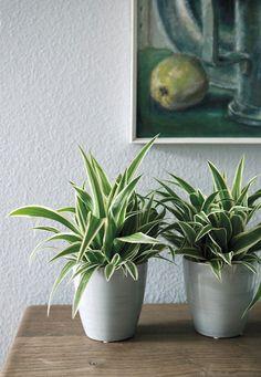 Växter stimulerar kreativiteten