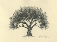 Olive Tree Pen and Ink Drawing - Fine Art Print - Watercolor Painting - Sympathy Gift - Symbol of Peace - Technical Drawing - Small Art Pine Tattoo, Tattoo Tree, Illustration Pen And Ink, Botanical Illustration, Green Watercolor, Watercolor Trees, Watercolor Painting, Tattoo Watercolor, Painting Art