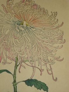 Antique Japanese Botanical by Keika Hasegawa (active 1893-1905)