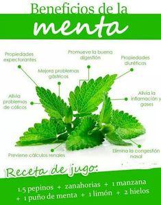 Menta #nutriciondeportiva
