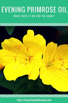 Evening primrose oil is said to do everything: moisturize skin, soothe it, treat acne and eczema... But, it's also one of the less studied oils used in skincare. So, what does science confirm it can do, and is it worth using it? Click through to find out.