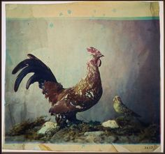 Louis Ducos Du Hauron | Still life with rooster | 3 color carbon transparency, 1879. Very early example of color photography using the gum bichromate process, in which color prints were made from three filtered black-and-white negatives. From the Eastman House collection.