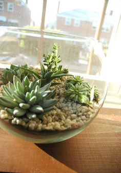 Indoor plants: Bringing life to your space