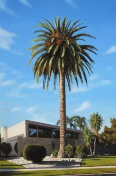 Palm Trees of New Mexico Drought Tolerant and Cold Hardy www.RealPalmTrees... 1-888-RPT-AGRO
