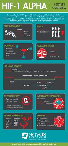 Discover protein expression purification and analysis ideas on interesting novus biologicals making infographics for individual proteins an infographic on hif 1 fandeluxe Images