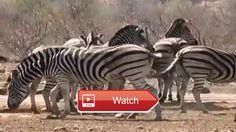 🐙 When Crazy Animals Attack Big Birds Attack Best Funny Animals 🐵 When Crazy Animals Attack Big Birds Attack Best Funny… #funnyanimals