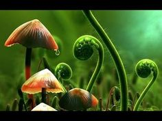 What Plants Talk About (Full Documentary)