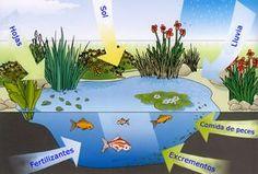 Ecosistema charca